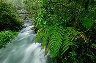 Oceania, New Zealand, Aotearoa, North Island, Tarawera River