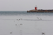 Trieste,gabbiani