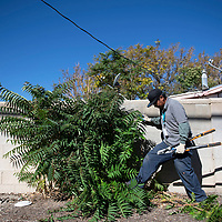 Nathan Begay helping to clean up an alley in the Mossman neighborhood, Wednesday, Sept. 12, 2018. The clean-up crew are graduates of Rehoboth McKinley Christian Substance Abuse Treatment Center and are removing trees, shrubs and brush from the alleyways as a preventative measure to curb break-ins in the area.