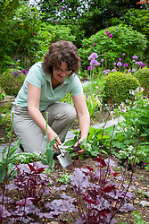 Planting out bedding plants in a border