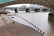 With the wooden piles of old warves and quays revealed in the low tidal waters of the Thames, a member of the public explores the rivers foreshore beneath Southwark Bridge, on 13th September 2021, in London, England. Excavating the Thames foreshore is only allowed by licensed Mudlarkers who scour the mud and shingle for historical artefacts dated from throughout Londons history as a port and ancient settlement.
