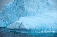 Iceberg in Antaerctic Sound,  January 2010, Antarctica 20100124