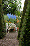 A gravel path through Yew spires leading to an old iron garden bench and border of Delphinium 'Skyline' at Wollerton Old Hall, Market Drayton, Shropshire, UK