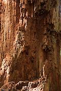 Red cedar wood.