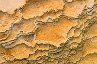 Thermophilic algae and fresh desposits of travertine in Mammoth Hot Springs, Yellowstone National Park