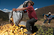 Don Alipio Quispe, Lares, managing the harvest of his corn, agriculture consumption is the main activity in the area.