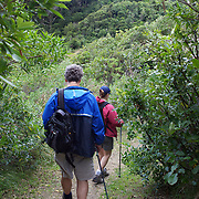 Walkers in the Te Urewera National Park on the Lake Waikaremoana Great Walk. .The remote, rugged, immense, Te Urewera National Park is famous for its lakes and forested beauty as well as its stormy history. In the southern part of the park lie two of the park's treasures, Lake Waikaremoana and the smaller Lake Waikareiti. .Te Urewera National Park lies between the Bay of Plenty and Hawke's Bay in the North Island of New Zealand.The nearest towns are Whakatane, Murupara and Wairoa. Te Urewera National Park, New Zealand. 18th January 2010. Photo Tim Clayton.