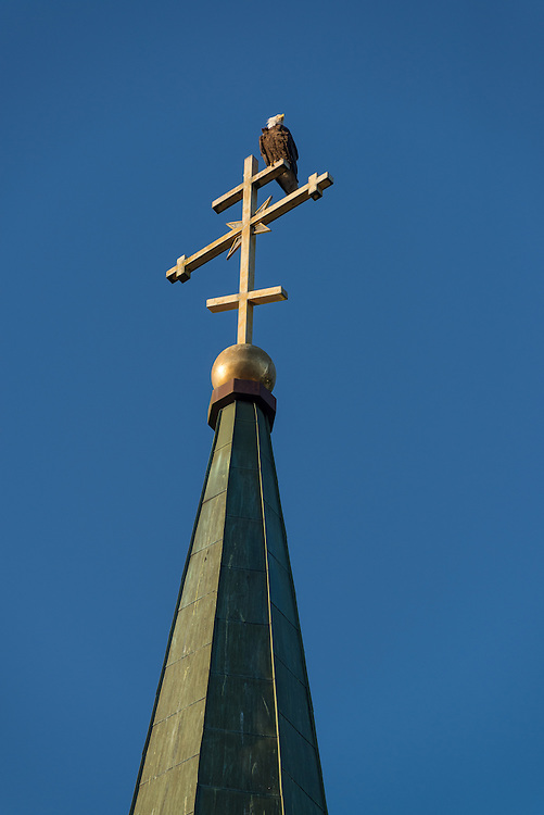 Bald eagle sitting on top of the steeple of St. Michael's Cathedral in Sitka, Alaska.