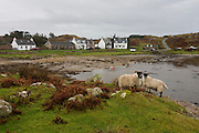 Cottages and homes in remote bay at Kintra, Isle of Mull, Scotland. The name comes from the Gaelic for 'end of the beach', 'Ceann Tràgha'. It was founded by the 5th Duke of Argyll to provide an income for himself and his tenants through fishing. Originally cottages with thatched roofs did not have gable ends or chimneys but this one has one gable and with a chimney attached. http://www.ambaile.org.uk/en/item/item_photograph.jsp?item_id=22178