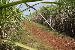 Sugar plantation at Manuel Sanguilly; Pinar Province; Cuba,