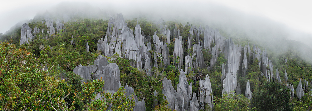 Weathering from rain and wind has given rise to these razor-sharp limestone pinnacles, which can be found on the upper slopes of Mount Api in Mulu National Park. Sarawak, Malaysia (Borneo).