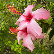 Lockdown South Africa - Day 11<br />