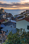 A view of the centre of Riomaggiore at sunset, with a lemon tree in the foreground