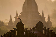 Temple and pagoda view with crow, early morning, Bagan, Myanmar