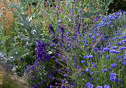 Cornflowers, anchusa and Onopordum acanthium in the cutting garden