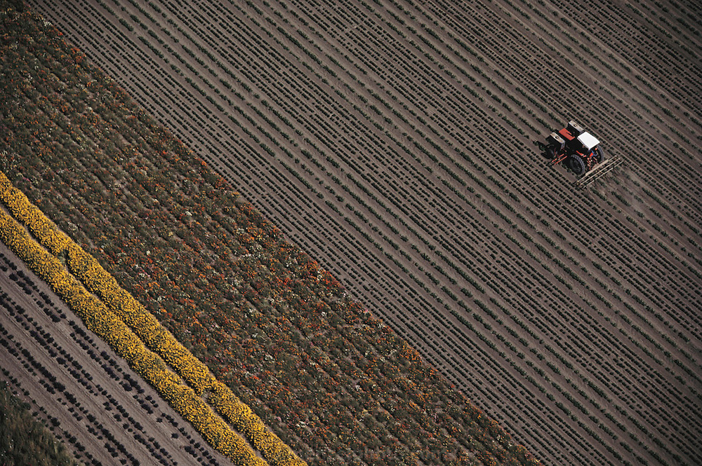 Aerial view of a tractor cultivating rows of flowers in Lompoc, California.
