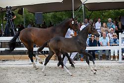 028, Rometa<br /> KWPN Kampioenschappen 2021<br /> Ermelo <br /> © Hippo Foto - Dirk Caremans<br /> 13/08/2021