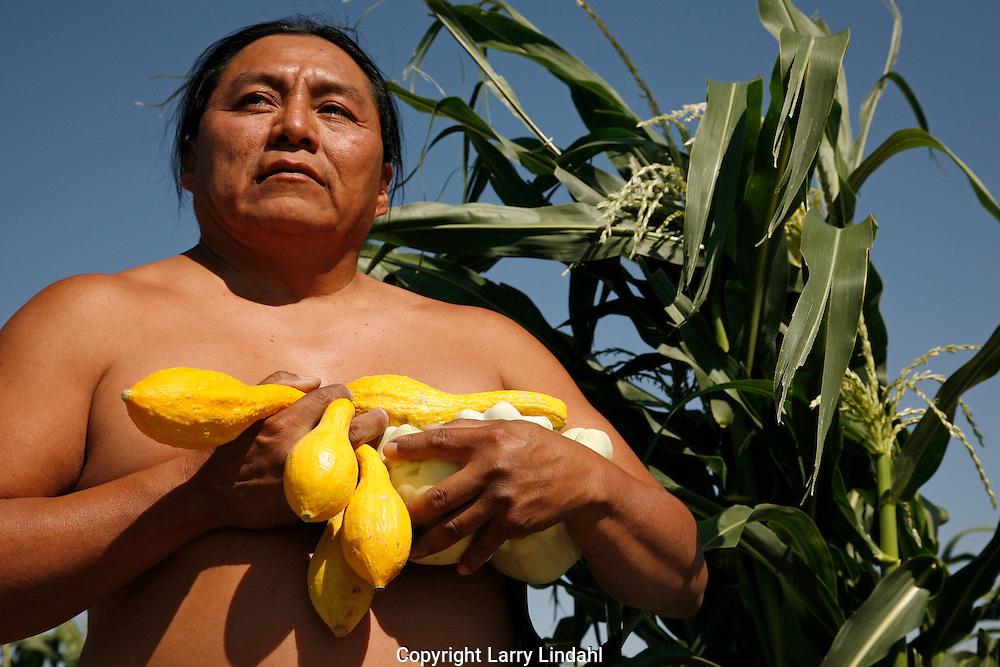 Squash plants grown in Duane Tawahongva's field, Hopi, Indian, Native American, Arizona,