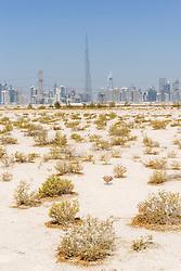 Skyline of skyscrapers and Burj Khalifa from the desert in Dubai United Arab Emirates