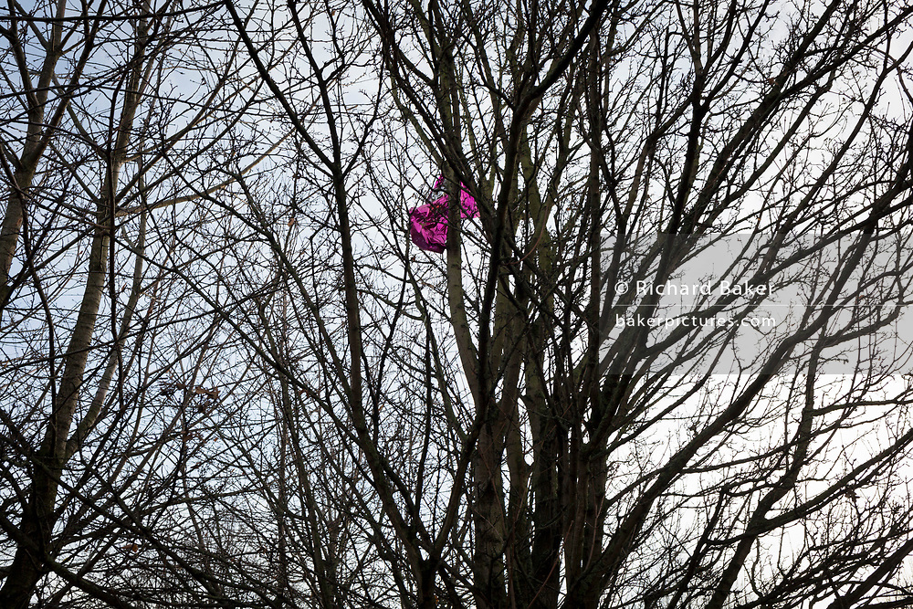 A deflated pink balloon tangled up in the branches of an urban tree in winter, on 7th December 2017, in London England.