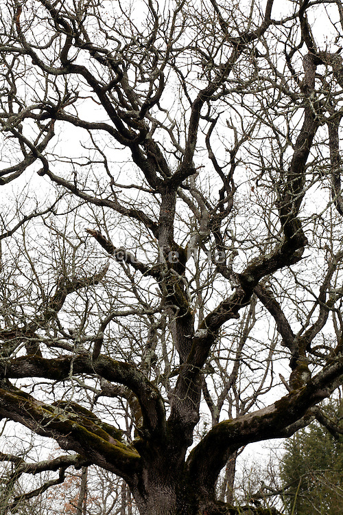 twigs of a bare deciduous tree during winter season