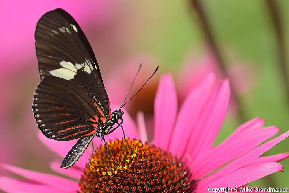 Butterfly Garden. Assiniboine Park<br /> Winnipeg<br /> Manitoba<br /> Canada