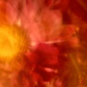 Fine art motion blur of a macro flower.