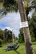 Sign on coconut palm tree warning of danger of falling coconuts. Kapa'au, Big Island, Hawaii RIGHTS MANAGED LICENSE AVAILABLE FROM www.PhotoLibrary.com