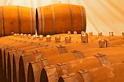Barriques barrels in the cellar in a row with glass bung hole stoppers - Chateau Haut Bergeron, Sauternes, Bordeaux