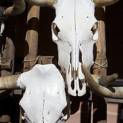Cattle skull bones outside a gallery in Santa Fe, New Mexico.