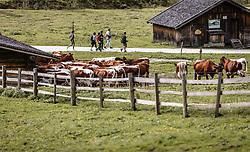 THEMENBILD - Wanderer am Weg und Kühe auf einer Weide auf der Palfner Alm, aufgenommen am 09. Spetember 2018 in Rauris, Österreich // Hiker on the way and cows on a pasture at the Palfner Alm, Rauris, Austria on 2018/09/09. EXPA Pictures © 2018, PhotoCredit: EXPA/ JFK