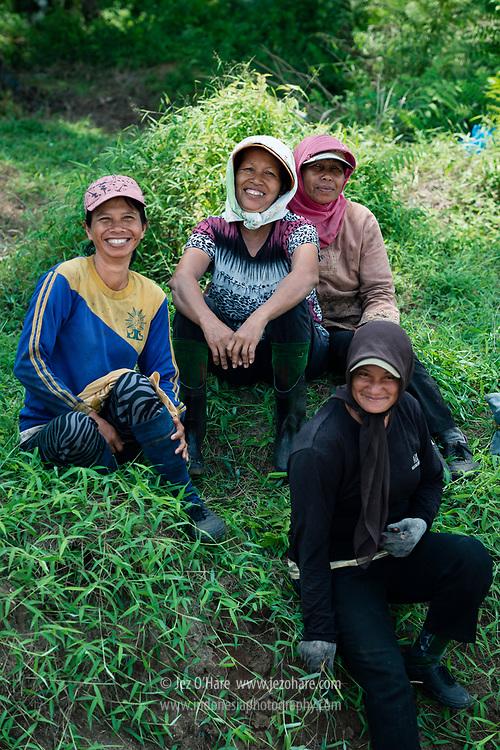 Weeding team, Bukit Maradja, Pematang Siantar, Gunung Malela, Simalungun, Sumatra Utara, Indonesia.