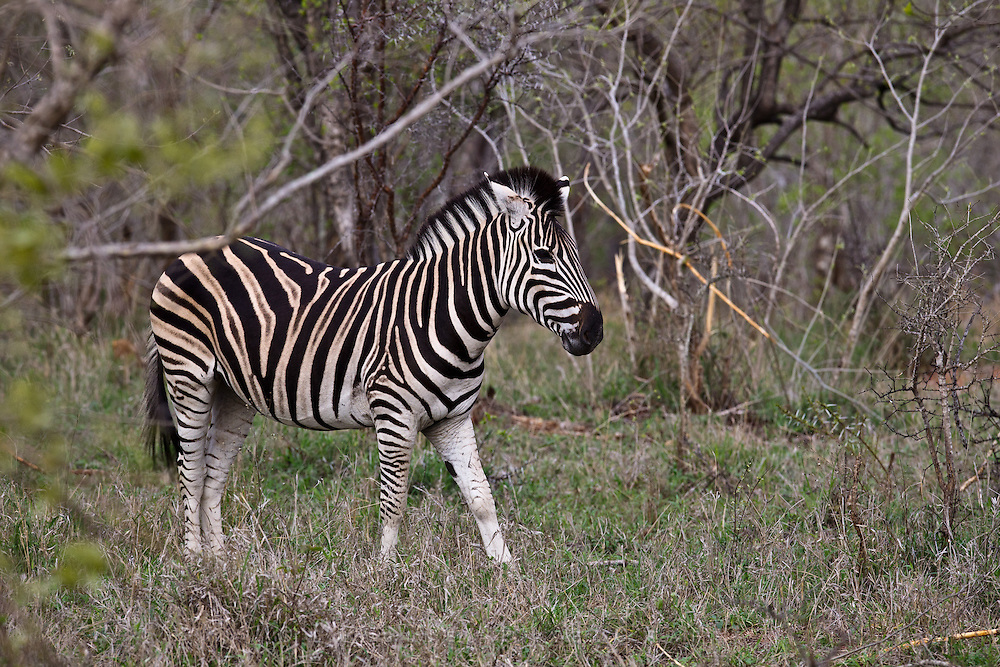 Scenes from a South African Safari