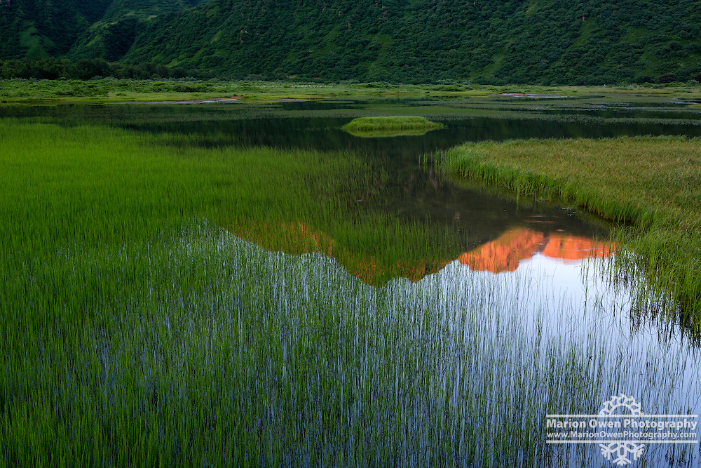 Sunrise warms mountaintops and reflects between grasses and reeds in Lake Rose Teed, Kodiak, Alaska