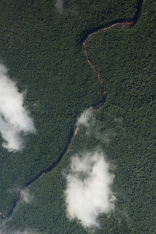 Rainforest Canopy<br /> Phillipai<br /> GUYANA<br /> South America
