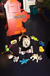 dog, Petcetera, Magazine Street, New Orleans
