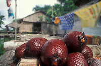 Fruta del moriche sobre piso de palafito, San FRancisco de Guayo, Estado Delta Amacuro, Venezuela
