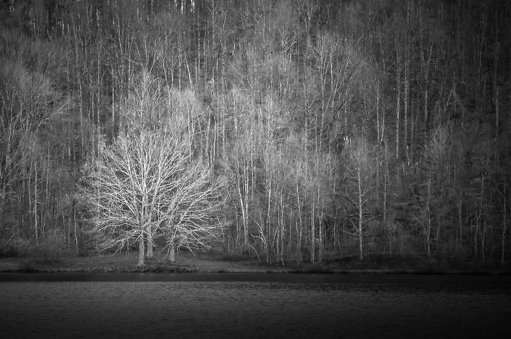 I was impressed at how a small stand of three trees could stand out against a background of hundreds.