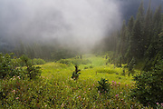 Mist and sunlight over a meadow under stormy skies in Glacier Peak Wilderness, Washington.