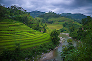 Paddy fields landscape along the road between Coc Pai (Xin Man),  and Hoang Su Phi, Vietnam, Southeast Asia