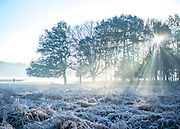 © Licensed to London News Pictures. 06/11/2014. Richmond, UK. A man jogs across a frosty field. People and animals during a frosty start to the day on 6th November 2014. Temperature fell across the country overnight. Photo credit : Stephen Simpson/LNP