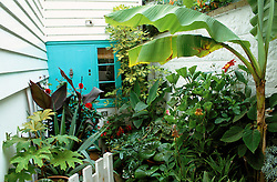 Tropical container planting in tiny passageway leading up to front door