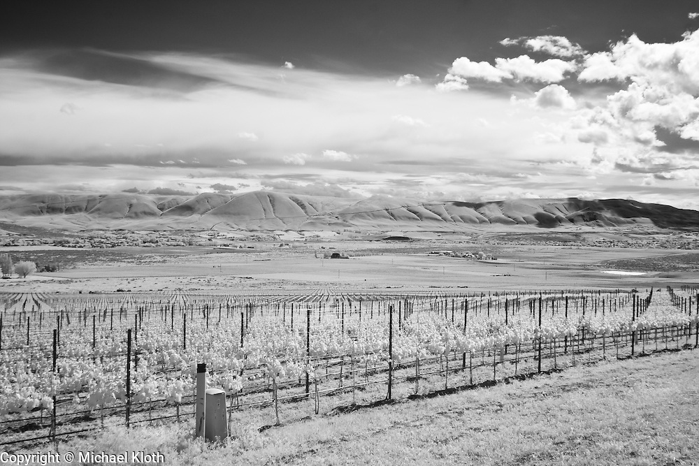 Infrared photograph of a vineyard in the Red Mountain AVA.  Fine art photography by Michael Kloth. Black and white infrared photographs