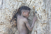 Africa, Tanzania, Lake Eyasi, young male Hadza child searches for honey. Hadza, or Hadzabe, are an indigenous ethnic group in north-central Tanzania, living around Lake Eyasi in the central Rift Valley and in the neighboring Serengeti Plateau