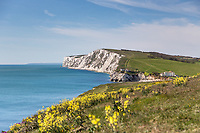 Spring on the Isle of Wight, the wildflowers are in bloom on the cliffs and the canoeists are enjoying themselves in the sea at Freshwater Bay. Beautiful spring day at Freshwater Bay on the Isle of Wight. With wildflowers in bloom on the cliffs and canoeists are enjoying themselves in the sea below.