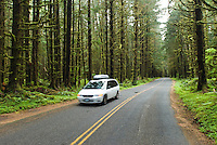 Car travels through Quinault Rain Forest, Olympic National Park, Washington.