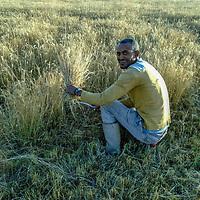 Harvest Hard Work by Deretu Lama