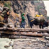 Sherpa women and a yak carry loads for trekkers in the Khumbu region of Nepal 1986.