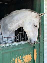 White Horse in a boarding stable