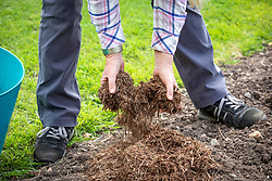 Mulching a border with strulch in spring